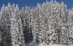 Schneeschuhwandern in den Vollmond