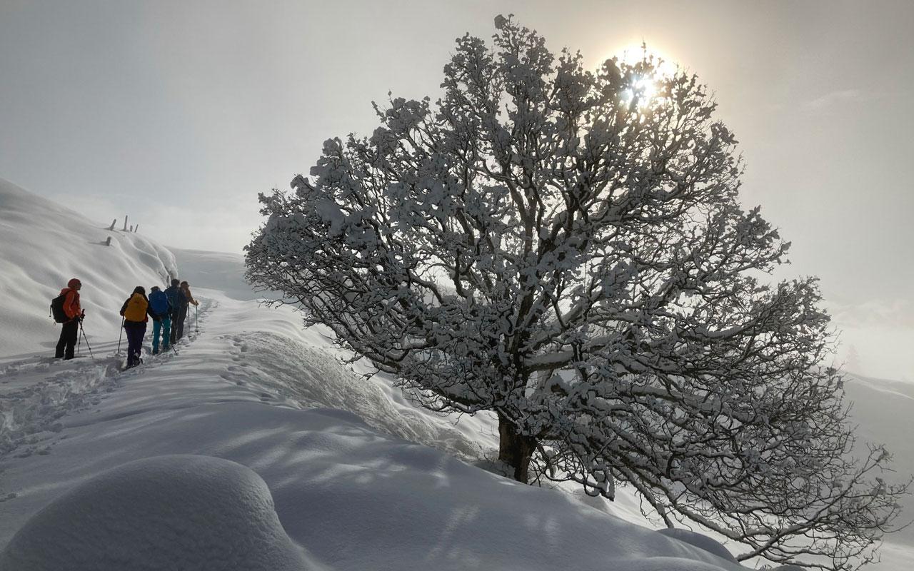 Hochwinter-Schneeschuhwanderung