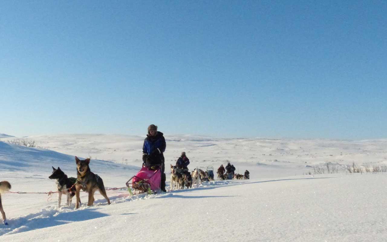 Lappland Huskysafari mit Polarlicht – Programm 2022