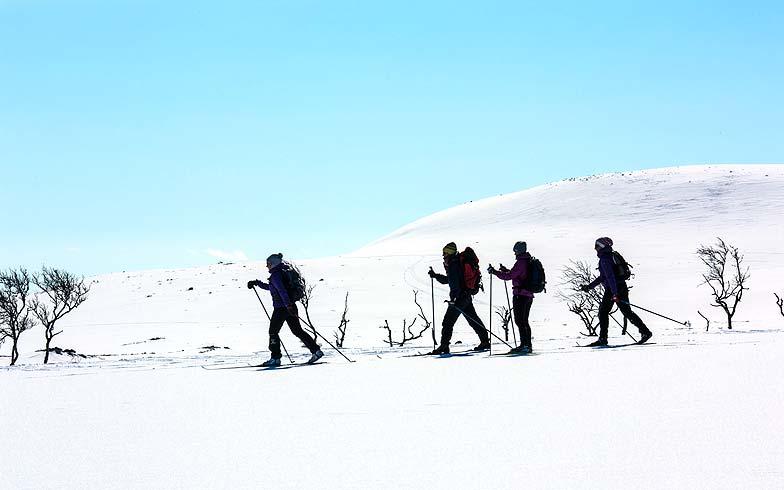 Länderinfo. Lappland Nordlicht Wintersport